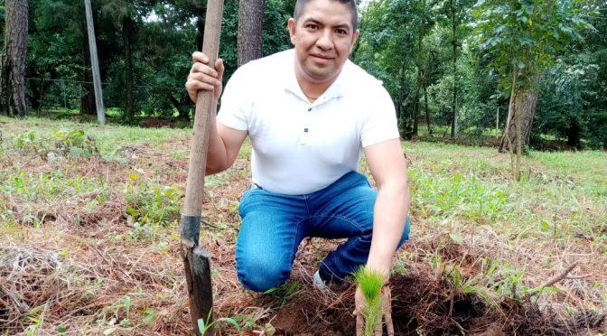 Paco Cedillo realiza campaña de reforestación en la comunidad de Nuevo Zirosto